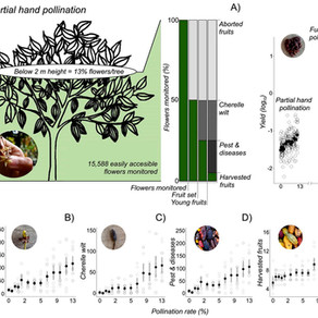 OCTOBER 2020 - New article on hand pollination in cocoa published