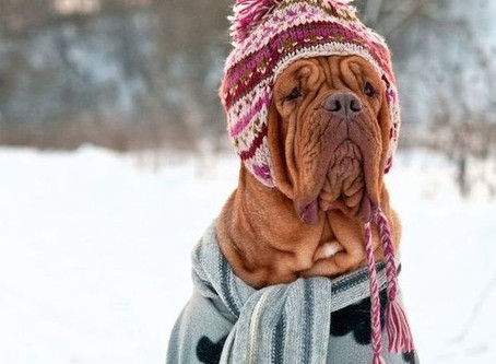 This Cold Weather is Ruff!