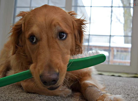 Teeth Brushing and Massage…HUH?!