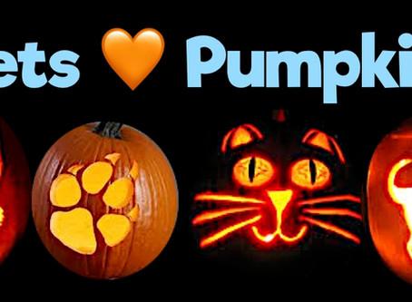 Pumpkin & It's Amazing Benefits For Pets!