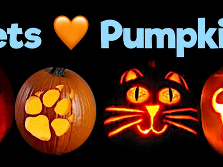 Pumpkin & It's Amazing Benefits For Pets!