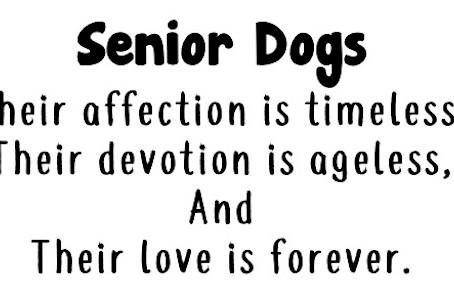 Lovin' The Senior Life!