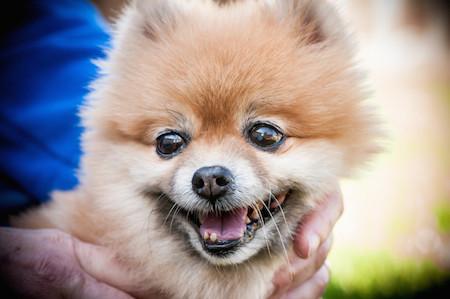 It's A Pet Massage Deal!