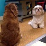 Friends at Canine Corral!