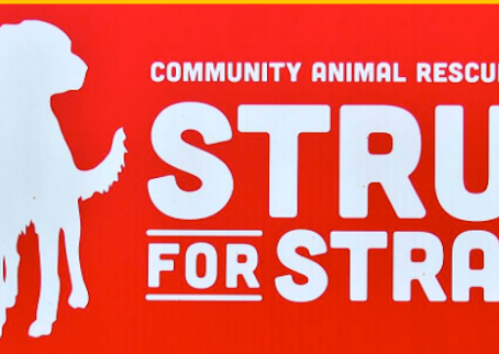 Strut For The Strays Event