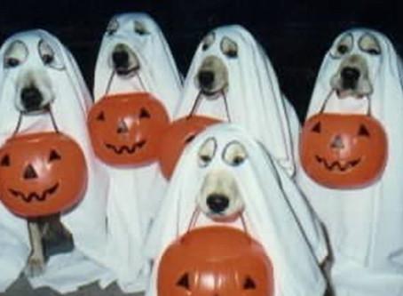 The Spooky Pooch Parade 2017