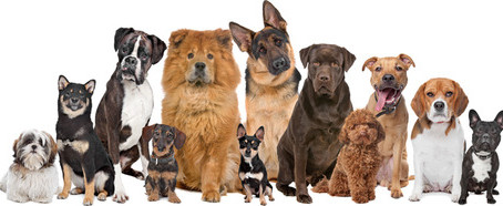Let's Celebrate National Dog Day!