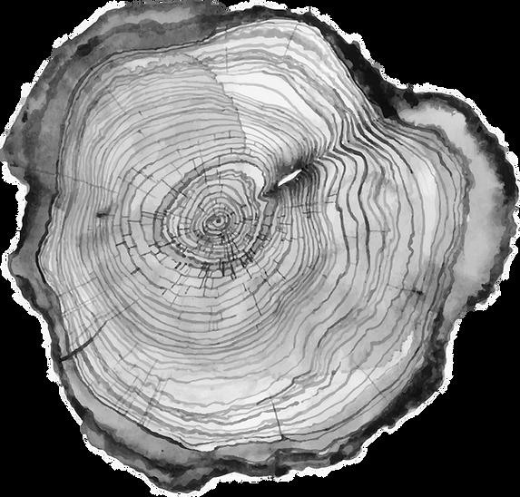 TREE RINGS.png