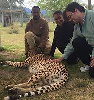 ivan cheetah.jpg