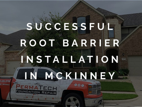 Trees and Foundation Issues in McKinney TX