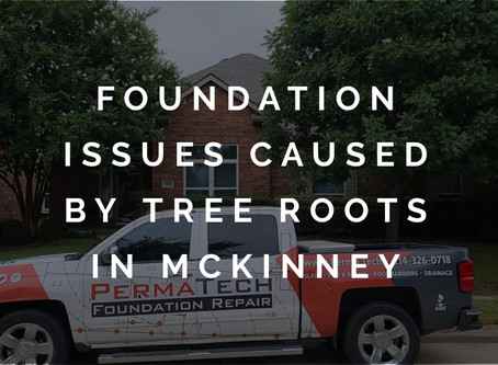 Creeping Roots Lead to Foundation Problems in a McKinney Home