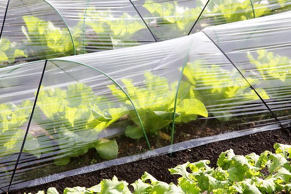 cultivo innovador