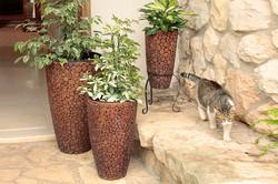 גומא-שלישיה-חתול