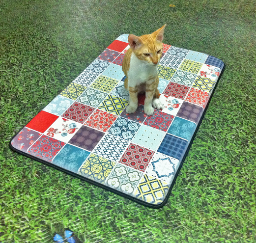 החתולים של הסטודיו
