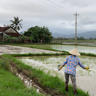 Landscape of Vietnam with Woman