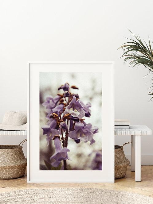 'Purple Spring'