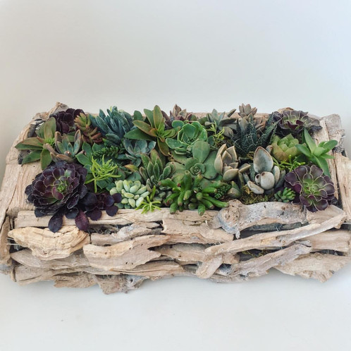 Lifeu0027s A Beach With Our Stunning Driftwood Succulent Table Centerpiece.  This Rectangular Planter Makes The Perfect Table Centrepiece!