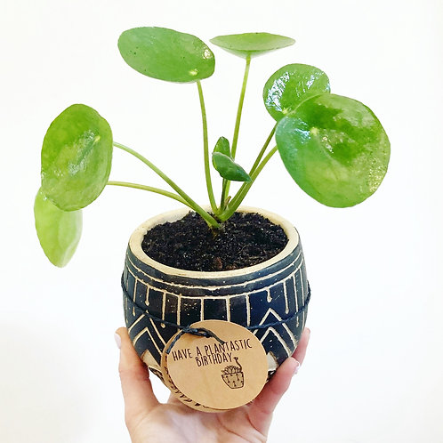 Zulu Black Embossed Cement Planter