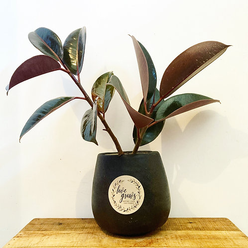 Mo Black Rounded Cement Planter