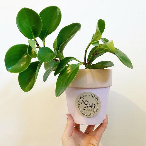 Rami Midi Terracotta Pastel Pot