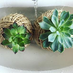 Perth Plant Delivery