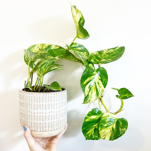 Monty Embossed Planter