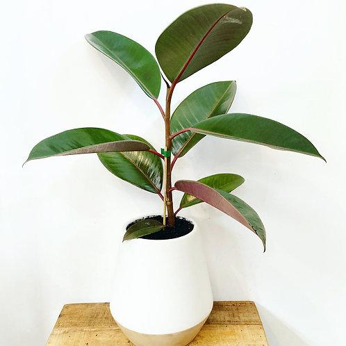 Perri Maxi Ceramic Planter