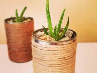 Mellow Aloe?