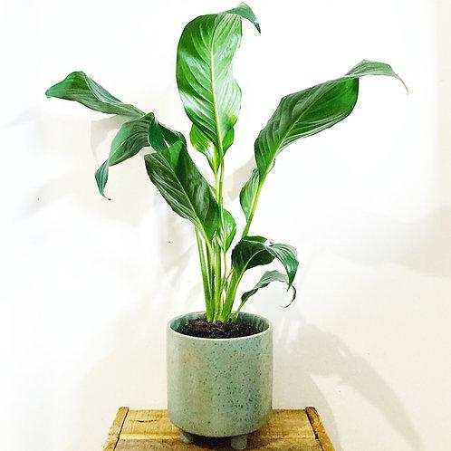 Cresta Green Ceramic Planter