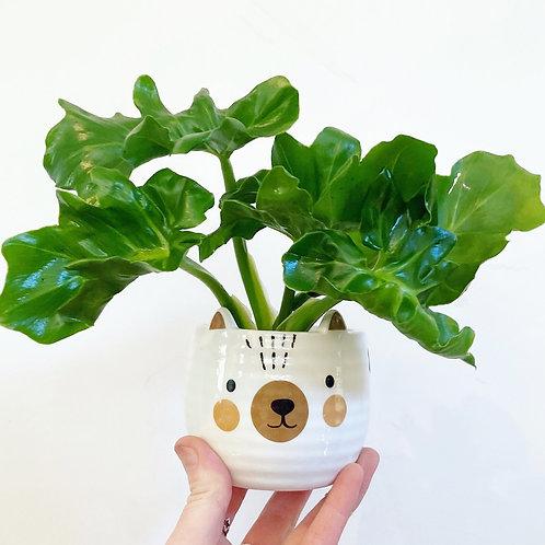 Teddy Bear Planter with Saucer