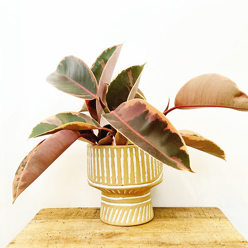 Swell Footed Bowl Planter