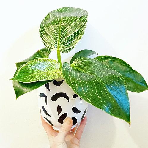 Kobi Abstract Ceramic Planter