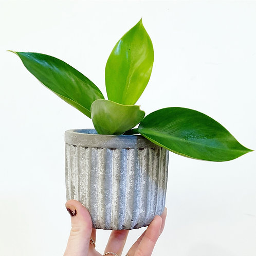 Otto Textured Mini Concrete Planter