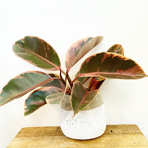 Sadie Two Tone Rounded Cement Planter