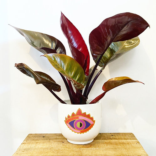Mythos Eye Planter