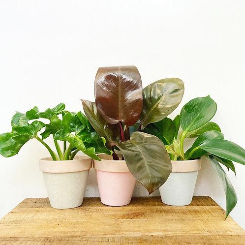 Rami Mini Terracotta Pastel Pot
