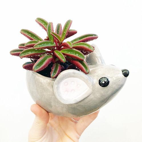 Maisy Mouse Planter