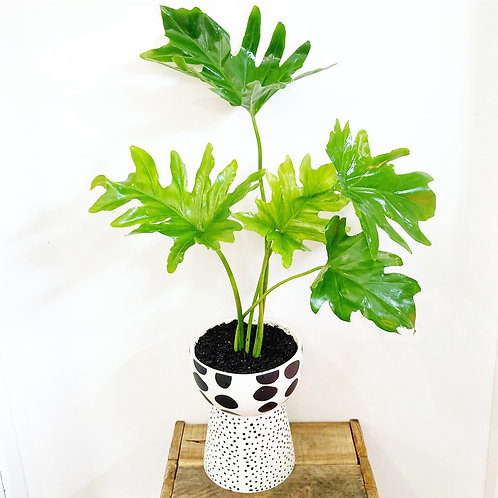 Zola Footed Bowl Planter