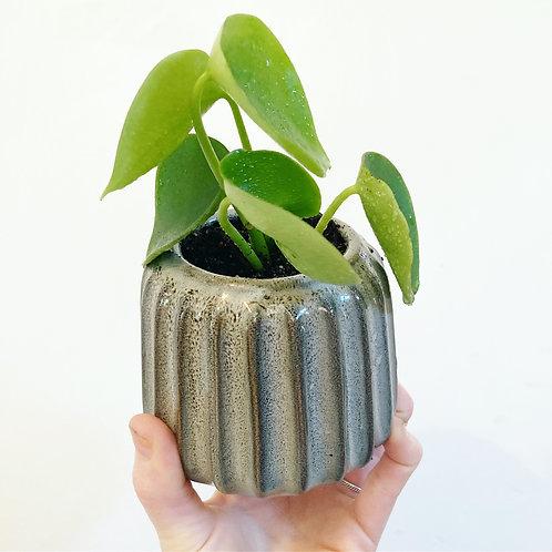 Dee Textured Ceramic Planter