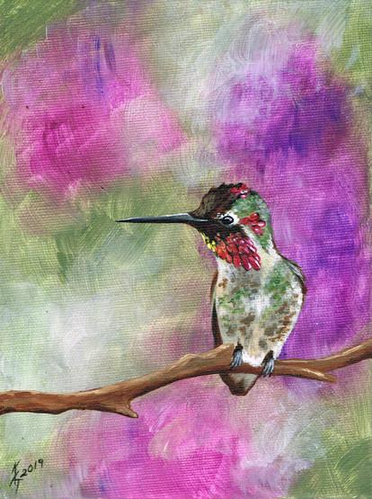 Hummingbird - Sitting