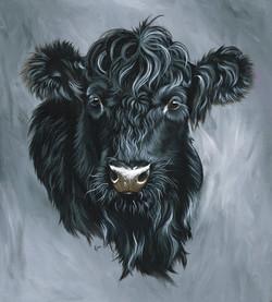 Black Welsh Cow