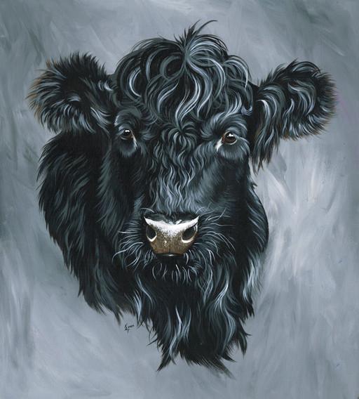 Black Welsh Cow.jpg