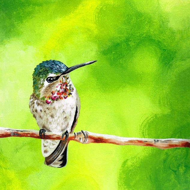 Hummingbird - Glance