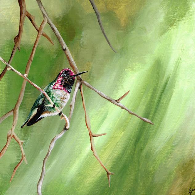 Hummingbird - Colour Amongst Branches