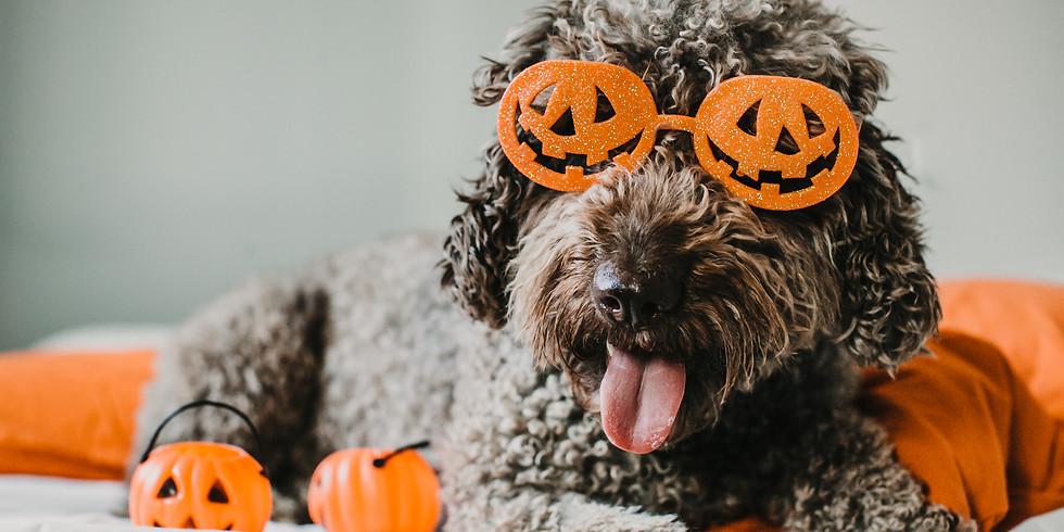 KNO Halloween Bash