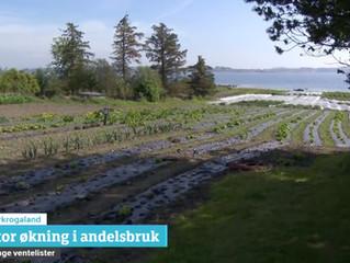 Flott innslag om Solbakken på NRK Rogaland