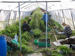 Høst på Raustein og Solbakken Andelsgard