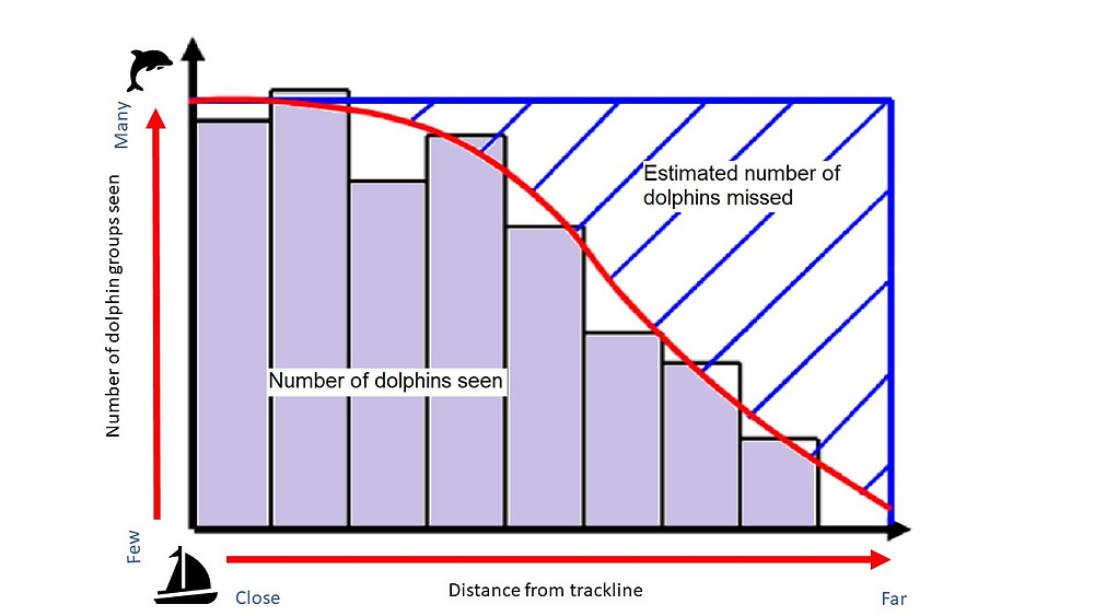 An example bar chart showing number of dolphins seen close to the boat, vs number seen further away from the boat.