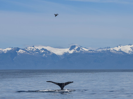 Feasibility study: quantifying the body condition of humpback whales in Alaska