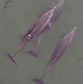 Dolphins_drone-2_edited_edited.jpg